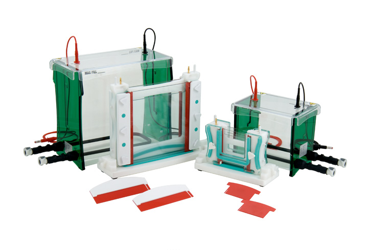 electrophoresis separation by using isoelectric focusing system A prototype two-dimensional capillary electrophoresis system fabricated in  in 2d gel electrophoresis, separation in the first dimension (usually by isoelectric.